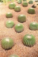 cactus en el parque