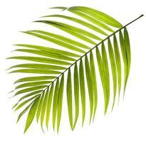 hoja de palma verde vivo