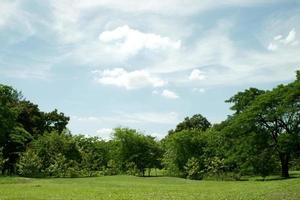 Green trees and grass with blue sky photo