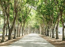camino a través de árboles foto