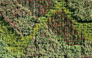 Flowers in vertical garden