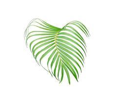 Vivid tropical leaf photo