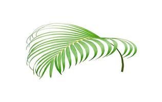 Vivid coconut leaf photo