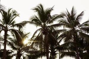 palmeras en la luz del sol