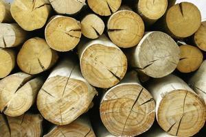 Wood log pile