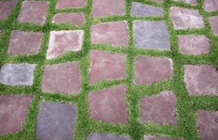 Stepping stones in grass