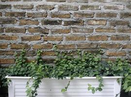 Planta en maceta contra la pared de ladrillo foto