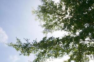 árbol en el cielo