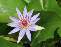 Vibrant purple flower