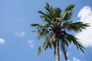 palmera bajo el cielo azul foto