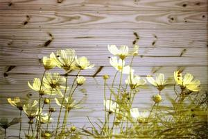 Yellow flowers against wood photo