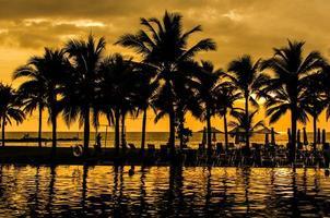 siluetas de palmeras foto