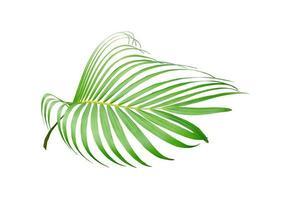 Vivid palm leaf photo
