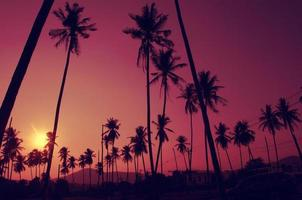 Coconut trees with purple skies photo