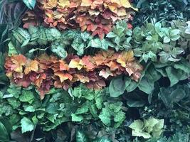 Mixed leaves on wall