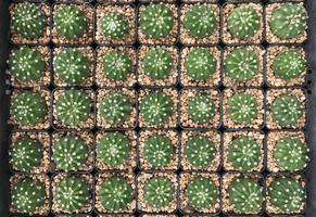 plantas en macetas vista superior