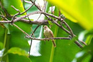 Small bird on a branch photo