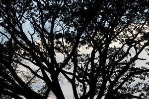 silueta de las ramas de los árboles