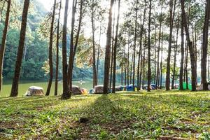 Camping site under the pine trees in Thailand photo