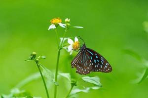 mariposa en la flor