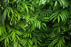 Leaves of a tree