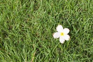 White flower on the grass photo