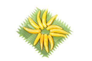 Yellow sweet peppers on a plate photo