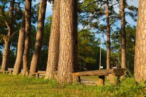 Under the pine trees photo