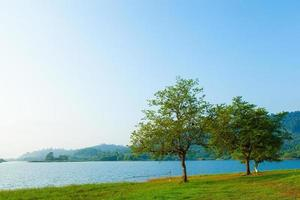 Trees by the lake photo