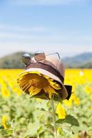 sombrero y gafas de sol en un girasol