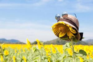 Hat and sunglasses on a sunflower