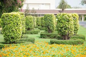 Bushes in the park in Thailand photo