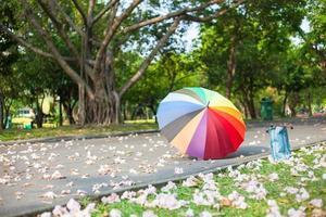 paraguas en el parque