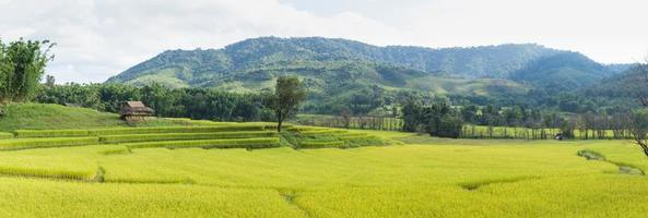 campo de arroz y montaña foto