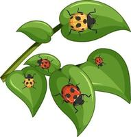 Top view of many ladybug on leaves vector