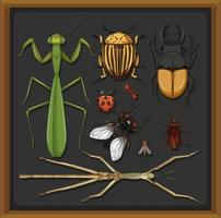 Set of different insects in wooden frame background vector