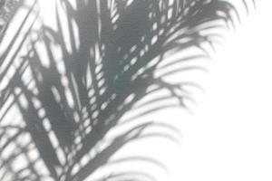 Tropical leaves shadows