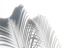 Palm leaves shadows