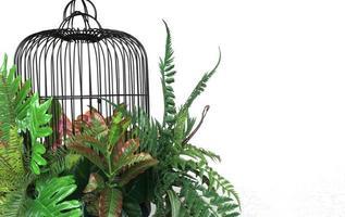 jaula de pájaros y plantas