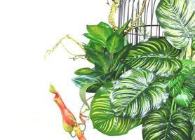 jaula y plantas