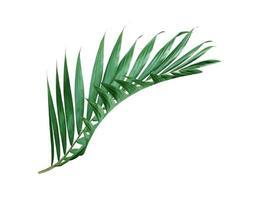 Deep green palm leaf
