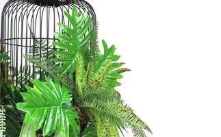 jaula de pájaros y plantas tropicales.