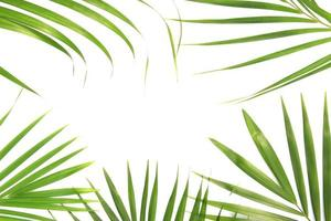 Frame of tropical leaves photo