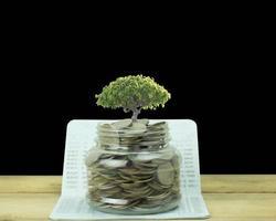 árbol que crece fuera de un tarro de monedas