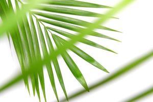 Lush bright green leaves photo