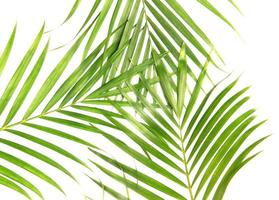 Group of palm tree leaves photo
