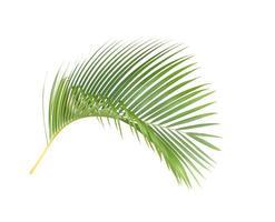 Curved lush bright green leaf photo