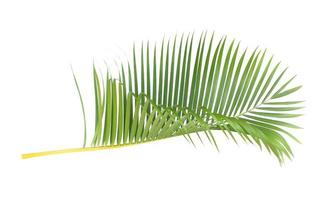 Vibrant tropical palm leaf photo