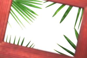 marco de fotos y hojas de palma