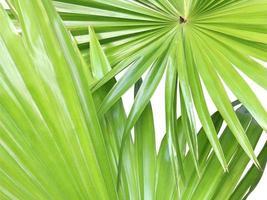 dos hojas verdes sobre blanco